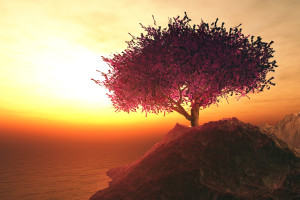 Lonely Cherry Blossoming Tree in the Rocks on the shore of endle
